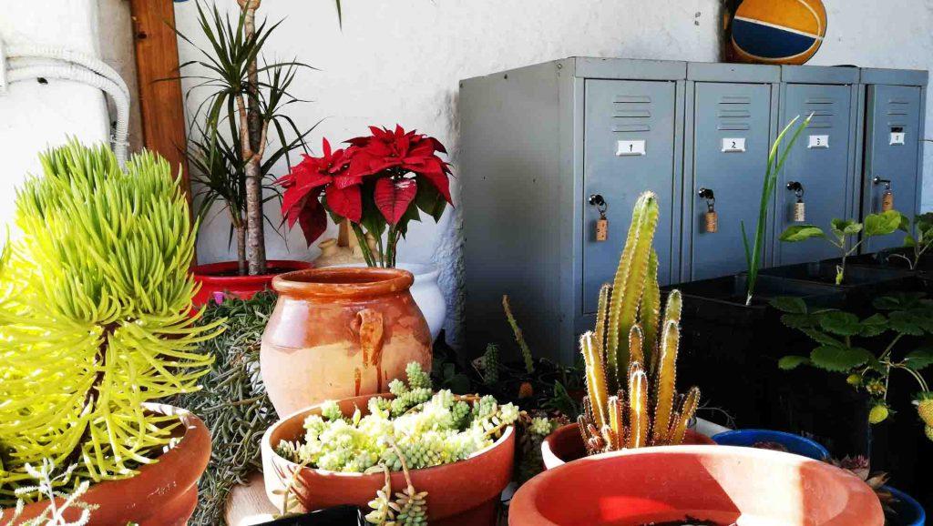 taquillas con plantas alrededor